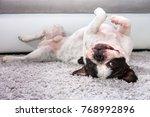 french bulldog lying down on... | Shutterstock . vector #768992896