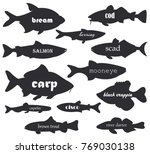 Commercial Fish Vector...