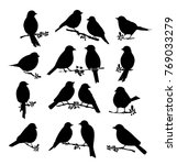 Stock vector black silhouette of birds big set 769033279