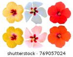 hibiscus syriacus on white... | Shutterstock . vector #769057024