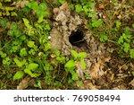 city of animals. colony of wild ... | Shutterstock . vector #769058494