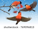 Small photo of red bird hibernate in the garden blue sky and snow
