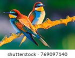 beautiful colorful birds in the ... | Shutterstock . vector #769097140