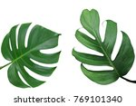 tropical leaves nature frame... | Shutterstock . vector #769101340