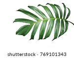 Tropical Green Leaf Of Split...