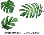 Tropical leaves nature frame...