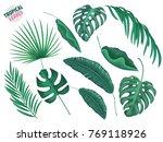 tropical leaves  exotic fern ... | Shutterstock .eps vector #769118926