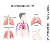 respiratory system  bronchiole... | Shutterstock . vector #769125088
