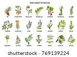 collection of natural herbs for ... | Shutterstock .eps vector #769139224