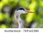 great blue heron | Shutterstock . vector #769161580