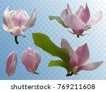 magnolia isolated spring flower ... | Shutterstock .eps vector #769211608