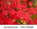 autumn background with maple... | Shutterstock . vector #769278688