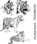 vector drawings sketches... | Shutterstock .eps vector #769288150
