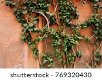 green tree plant growing along... | Shutterstock . vector #769320430
