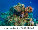 coral reef in red sea... | Shutterstock . vector #769358764