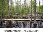goose creek state park | Shutterstock . vector #769363084