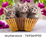 Stock photo three little kittens sitting in a basket with flowers 769364950