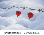 cape gooseberry and snow | Shutterstock . vector #769385218