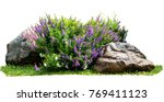 natural flower and stone in... | Shutterstock . vector #769411123