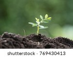 young plant in the morning... | Shutterstock . vector #769430413