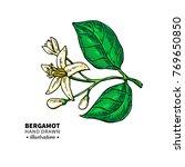bergamot flower branch vector... | Shutterstock .eps vector #769650850