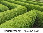 green hedges of a labyrinth... | Shutterstock . vector #769665460