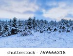 beautiful pine trees covered... | Shutterstock . vector #769666318