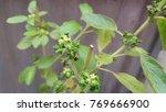leaf diseases nature