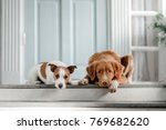 two dogs are lying on the porch.... | Shutterstock . vector #769682620