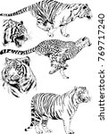 vector drawings sketches... | Shutterstock .eps vector #769717240