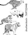 vector drawings sketches... | Shutterstock .eps vector #769722448