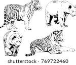 vector drawings sketches... | Shutterstock .eps vector #769722460