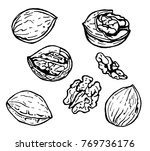 vector drawing a set of walnuts.... | Shutterstock .eps vector #769736176