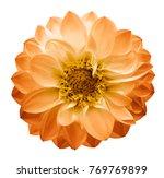autumn yellow orange   flower... | Shutterstock . vector #769769899