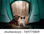 Stock photo two dogs in a tent in the forest travel with the pet nova scotia duck tolling retriever and a 769775809