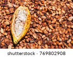 indonesian cocoa trees... | Shutterstock . vector #769802908