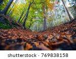 beautiful autumn forest... | Shutterstock . vector #769838158