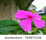 flower beauty colorful | Shutterstock . vector #769872196