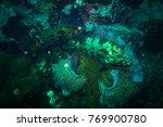 malabar grouper near koh tao... | Shutterstock . vector #769900780