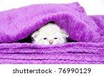 Stock photo cute baby kitten resting inside of a purple blanket 76990129