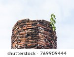Sacred Fig Tree Growing On The...