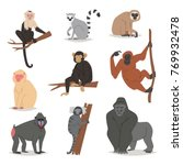 monkey vector set cute animal... | Shutterstock .eps vector #769932478