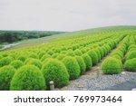 hitachinaka seaside park   Shutterstock . vector #769973464