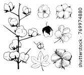 hand drawn flowers. cotton... | Shutterstock .eps vector #769974880