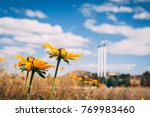 flowers in the old mill... | Shutterstock . vector #769983460