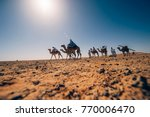 Camels Walk Through The Desert...