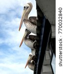 Pelicans Resting On A Roof