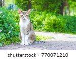 cute cat in ourdoor park    Shutterstock . vector #770071210