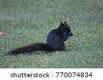 black squirrel searching for... | Shutterstock . vector #770074834