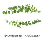 decorative eucalyptus green... | Shutterstock . vector #770083654